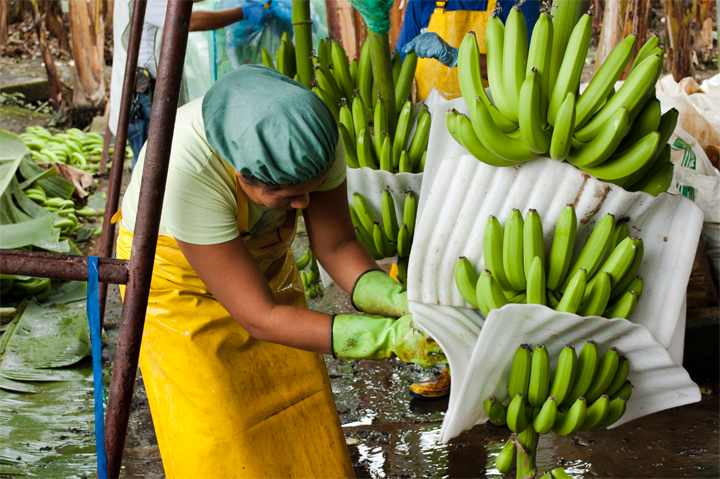 Göteborg fortsätter utvecklas som Fairtrade City